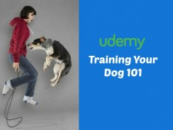 Training Your Dog 101 Reviews