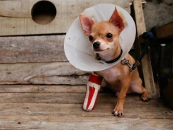 Pet Insurance Buyers Guide