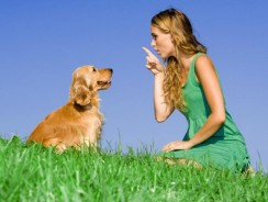 Dog Training Program Buyers Guide