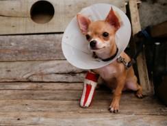 Pet Insurance Buyers Guide